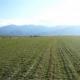 Спекулата с пустеещите български земи